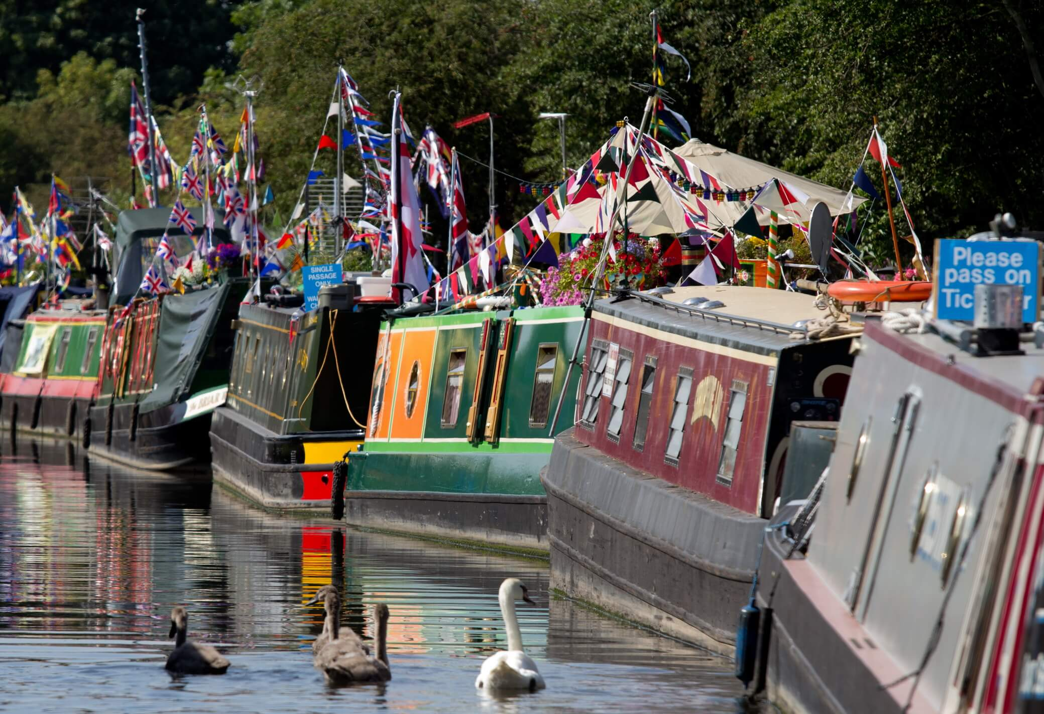 Swans swimming on the canal alongside the flag festooned canal boats at The Waterways Festival in Burton on Trent