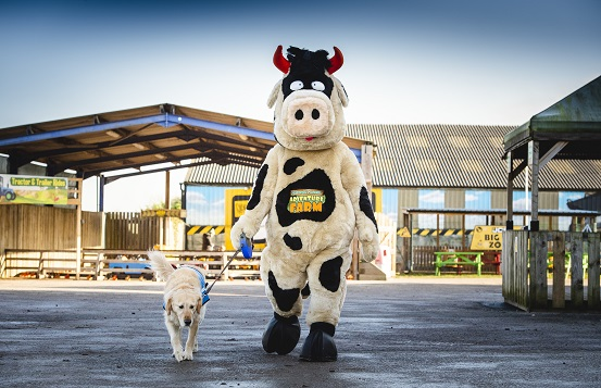 Crumpet the cow walking a trained guide dog around the National Forest Adventure Farm