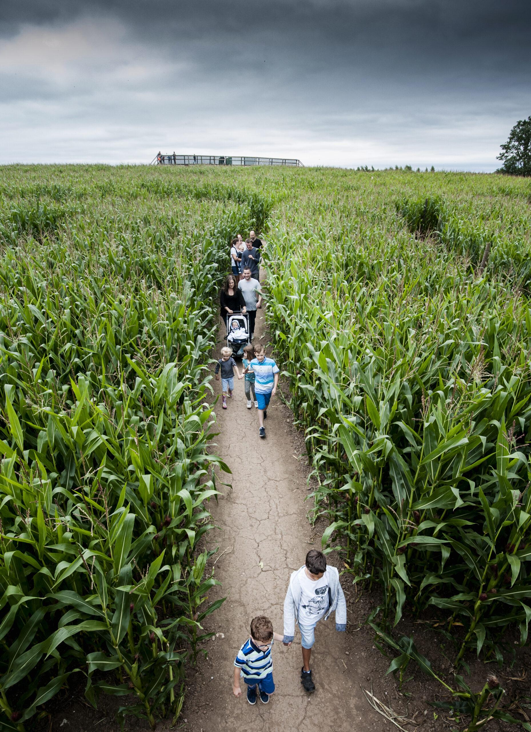 13 family members walking around maize maze